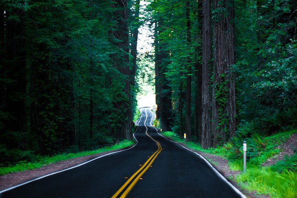 The road winds among the redwoods in California by Chris Willis